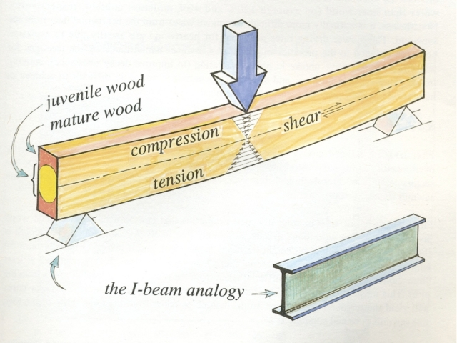 Modern dimensional lumber versus old-growth timber, we needed to begin thinking about what our existing timbers needed and how weakened timbers could be augmented, both for compression and tensile forces.